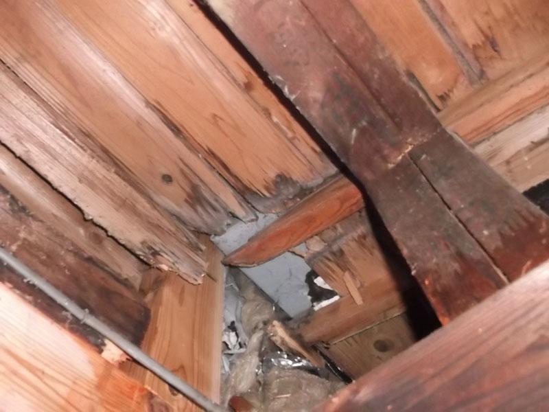 7.浴室天井シロアリ被害